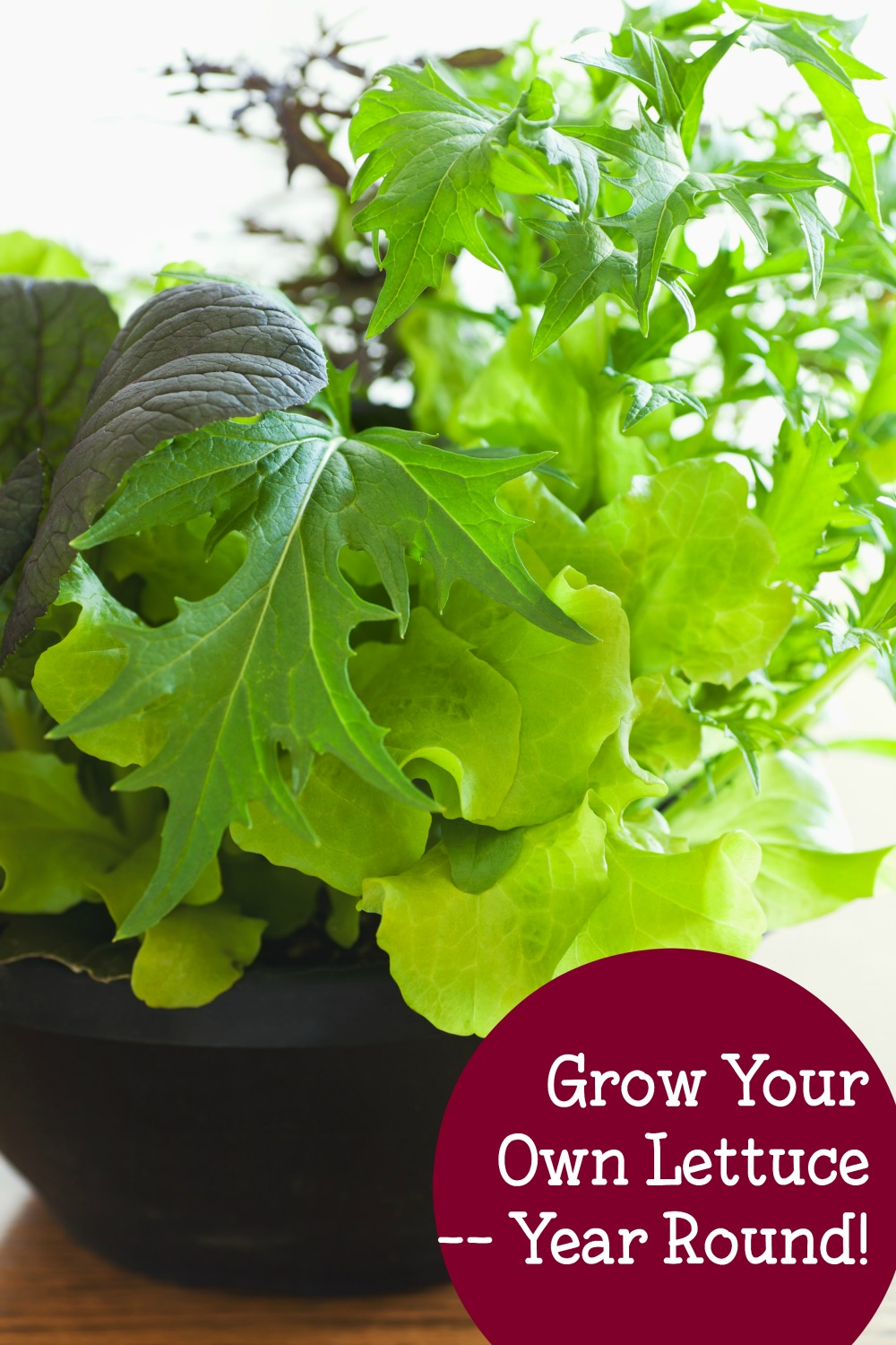 Easy ways to grow your own lettuce year round